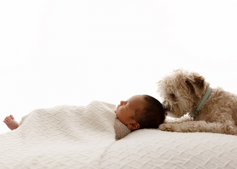 Dogs are welcome at newborn photoshoots with Melbourne photographer Paula Andrews