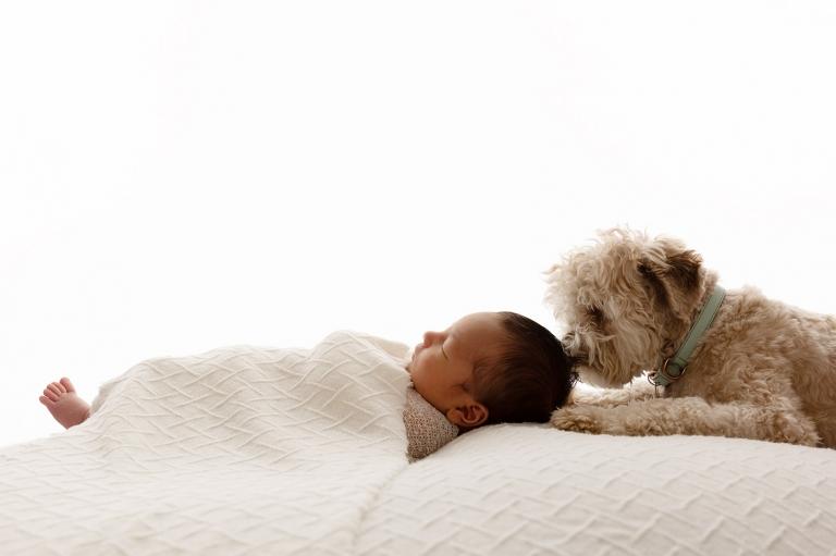 Dog joins newborn baby in newborn photoshoot with newborn photographer Paula Andrews